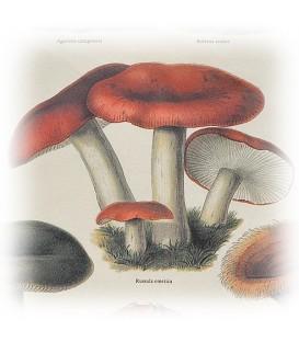 """Decorative Paper """"Mushrooms"""" Tassotti 50 x 70 cm 85 g/m²"""